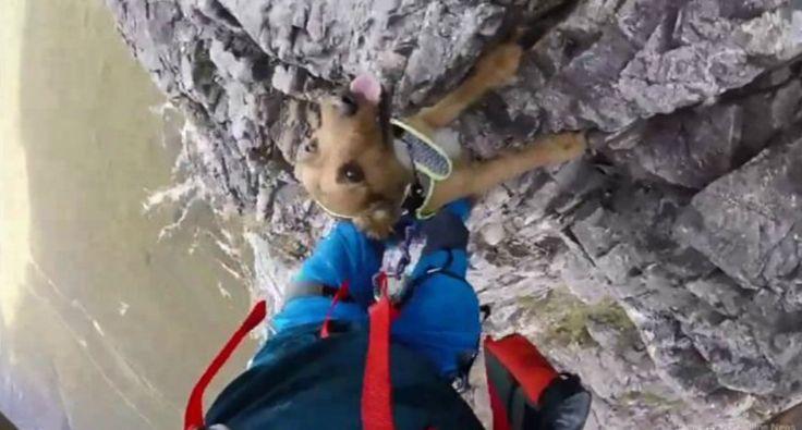 Destemido Cão Acompanha Dono Durante a Escalada De Assustadora Montanha