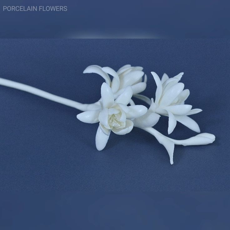 Porcelain flower tuberosa. White biscuit porcelain. Every petal are handmade. It was not an easy…»