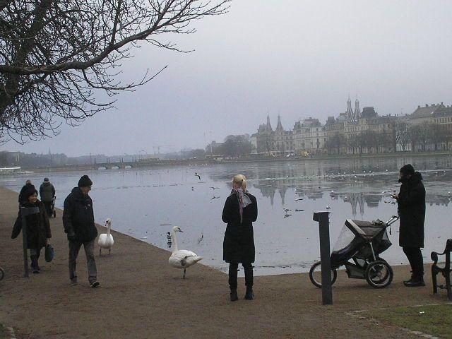 Copenhagen wildlife