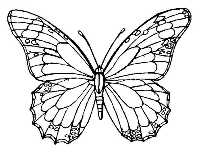 Monarch Butterfly Coloring Page Book