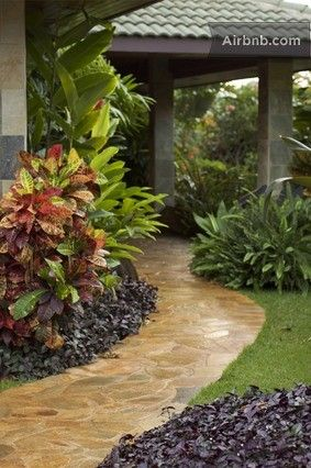 Tropical Garden - like the multi coloured crotons, with the ginger behind it & the dark purple under planting ground cover. Neat & tidy next to the stone path