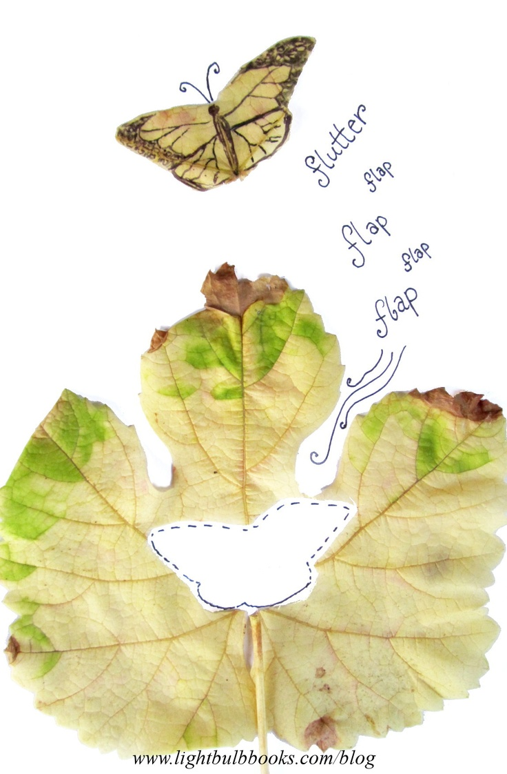 best 25 picture of a butterfly ideas on pinterest pictures of