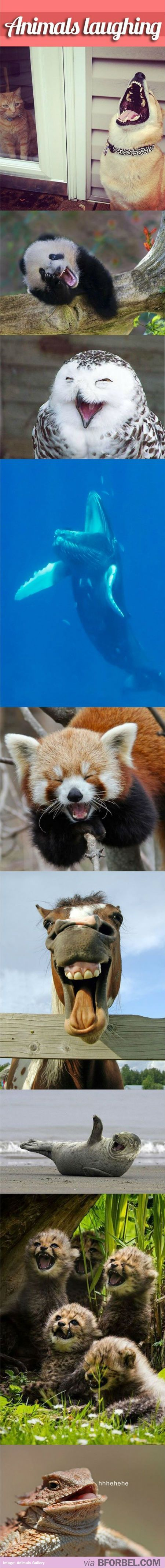 If You're Having A Bad Day, Here Are 9 Animals Laughing Like They Have No Worries In The World…