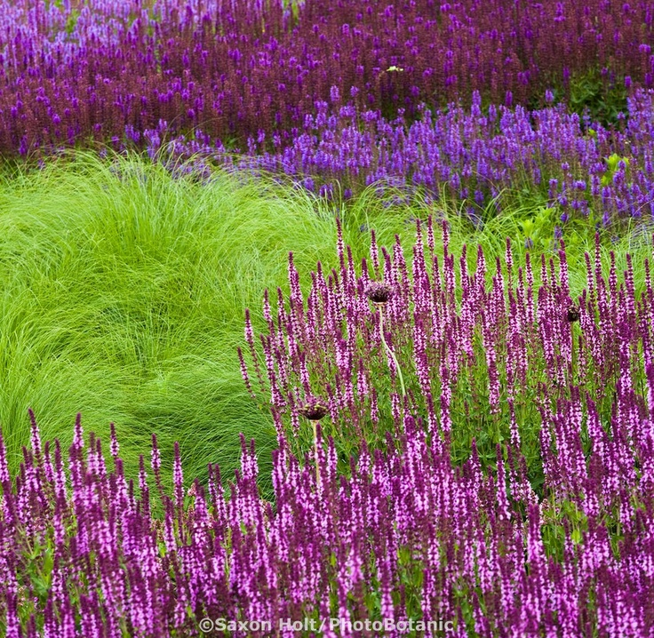 Perennial Grasses For Alberta : Best images about garden inspiration plant