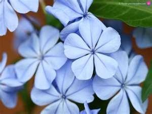 Blue Flower Wallpaper... Bleu on Bleu