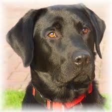 *http://www.ezoterikus.hu/cikkek/168 *http://www.hotdog.hu/rydaa-ezoteria/mindenfele/szerencse-hozo-allatok titkos segítők  Kutya  A lojalitás és a feltétel nélküli szeretet legjelentősebb jelképe a világ szinte minden pontján.