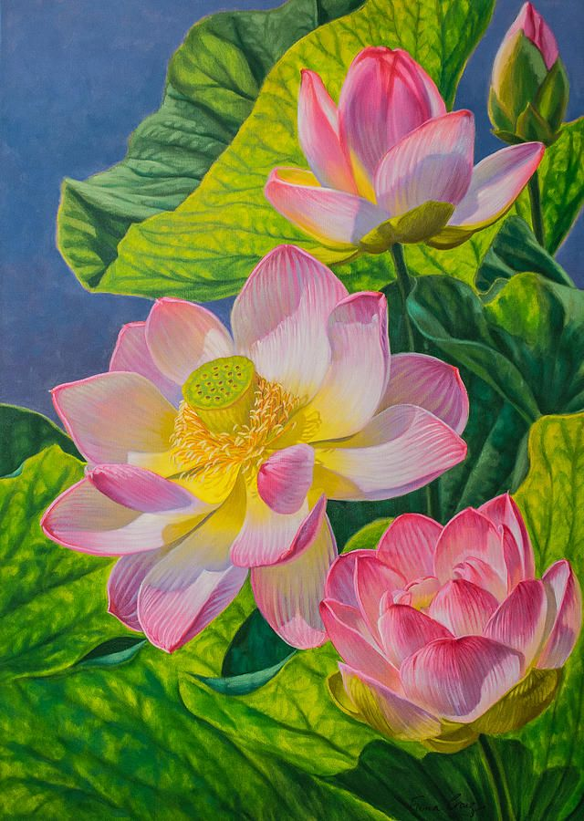 34 Best Water Lilies And Lotuses Images On Pinterest Flower Paintings Flower Pictures And