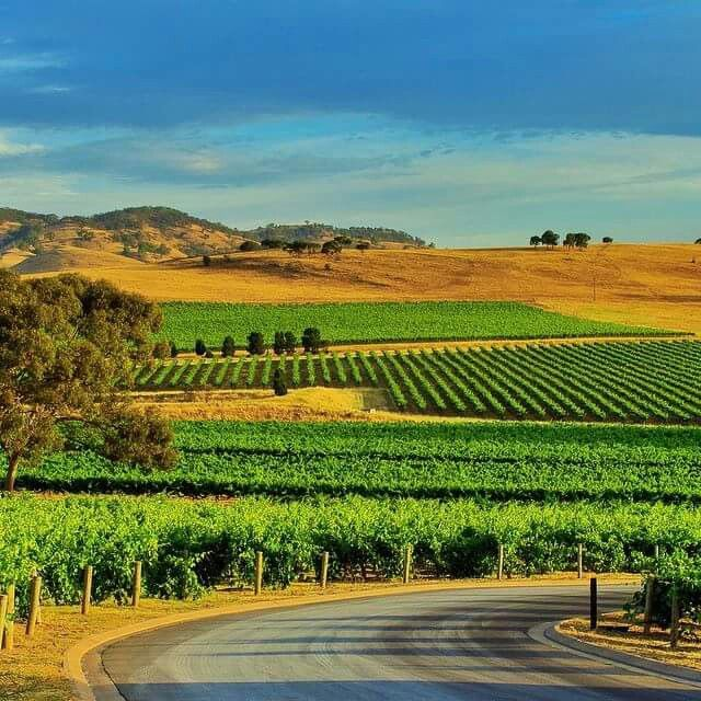 Barossa Valley, South Australia. To learn more about Adelaide | South Australia, click here: http://www.greatwinecapitals.com/capitals/adelaide-south-australia
