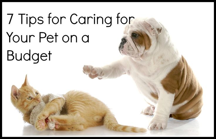 freepetcareinfo.com Get free advice and tips on pets care. We provide useful information regarding Dogs, Cats and other pet animals. | Bark N Babies | 8134 E Indian School Rd, Scottsdale, Arizona 85251