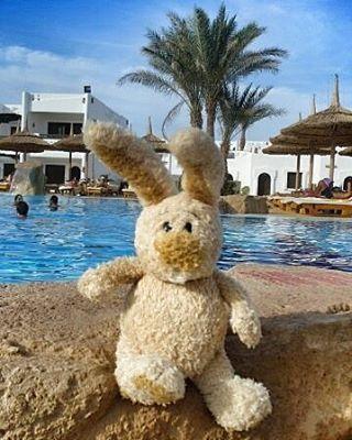Ну что, зайцы мои, вот и наступила весна!!!! Конечно, еще довольно холодно, но солнышко сегодня радует!!!! Я чувствую запах весны!!!! А ведь весной и летом с нами случается больше всего путешествий😉 Ветер странствий манит!!!! Всех люблю, ваш весенний #zayac_traveller!!!! египет#хургада#каир#шармэльшейх#заяцпутешественник#zayac_traveller_new#zayac_traveller#путешествия #travel#travelblog #travelgram #photooftheday #travel #lonelyplanet #vacation #natgeoru #worldplaces #travelphoto…