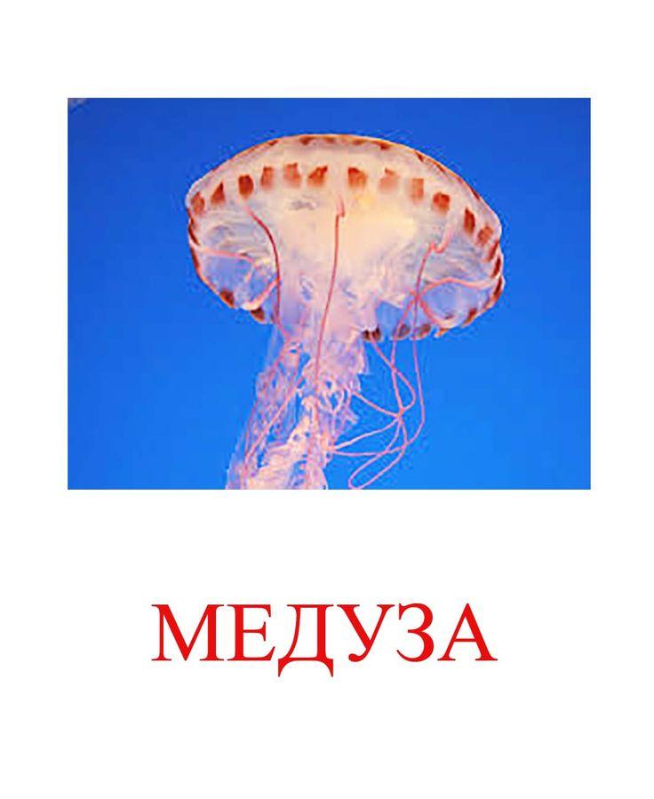 картинки для детей медуза