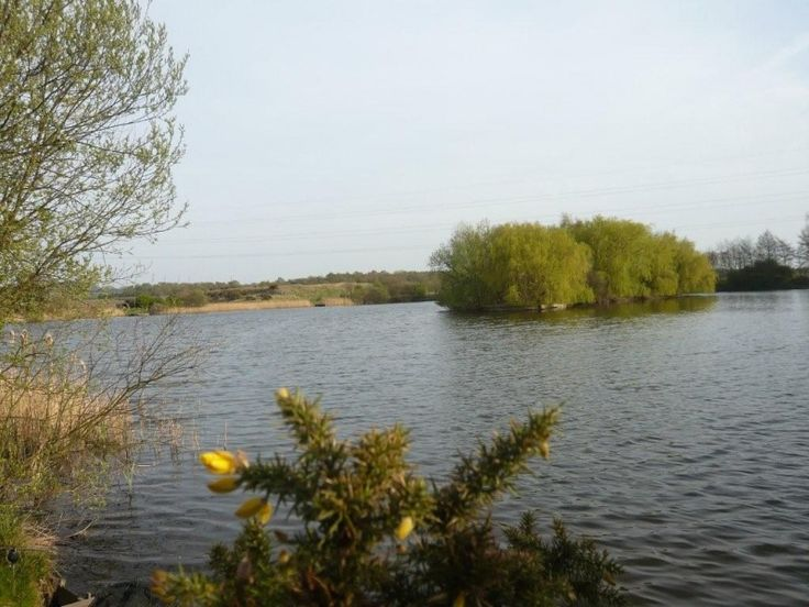 Carp Fishing Lakes at The Manor House, Manton - Bed and Breakfast in Lincolnshire