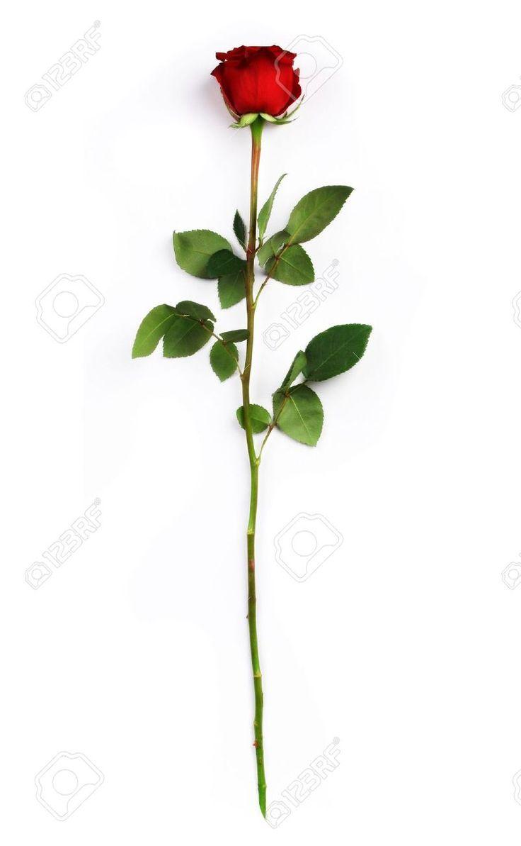 long stem red rose sternum tattoo - Google Search
