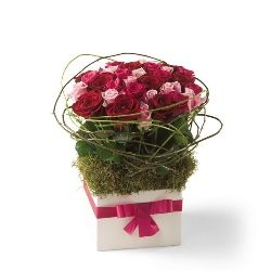 Congratulation flowers and gifts: Sweet Celebrations
