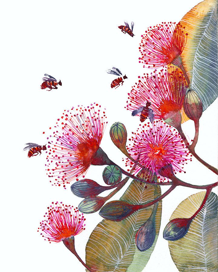 Pink Flowering Gum - flowers and bees, nature art print by OlaLiola, size 8x10 (No. 24).19.00, via Etsy.