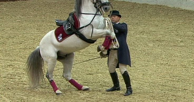 Cavalos mais bonitos da Europa fazem espetáculo na Eslovênia