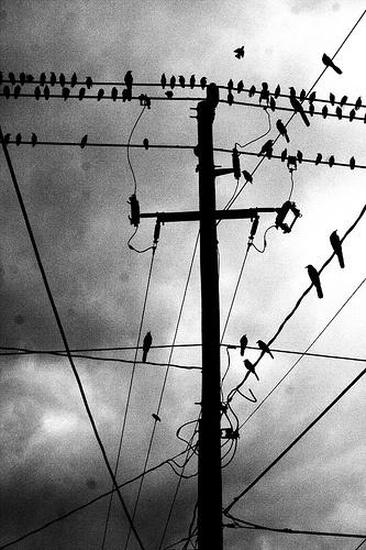Power pole with birds.