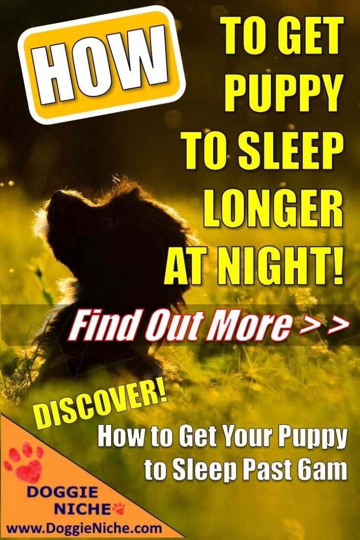 How to get puppy to sleep longer at night thats the