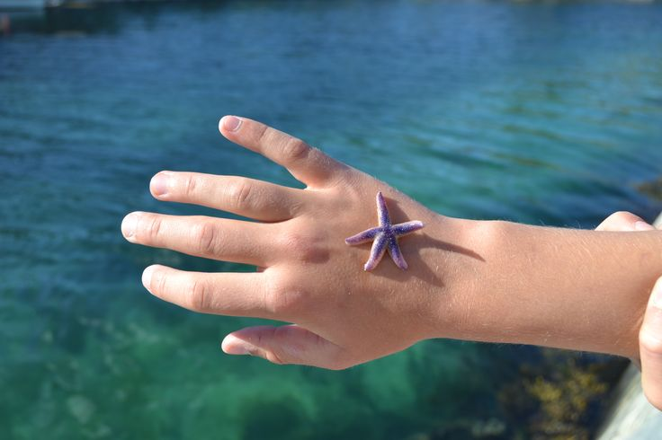 A sea star from the oceans of Southern Norway. This is from Brekkestø in Lillesand near Kristiansand.