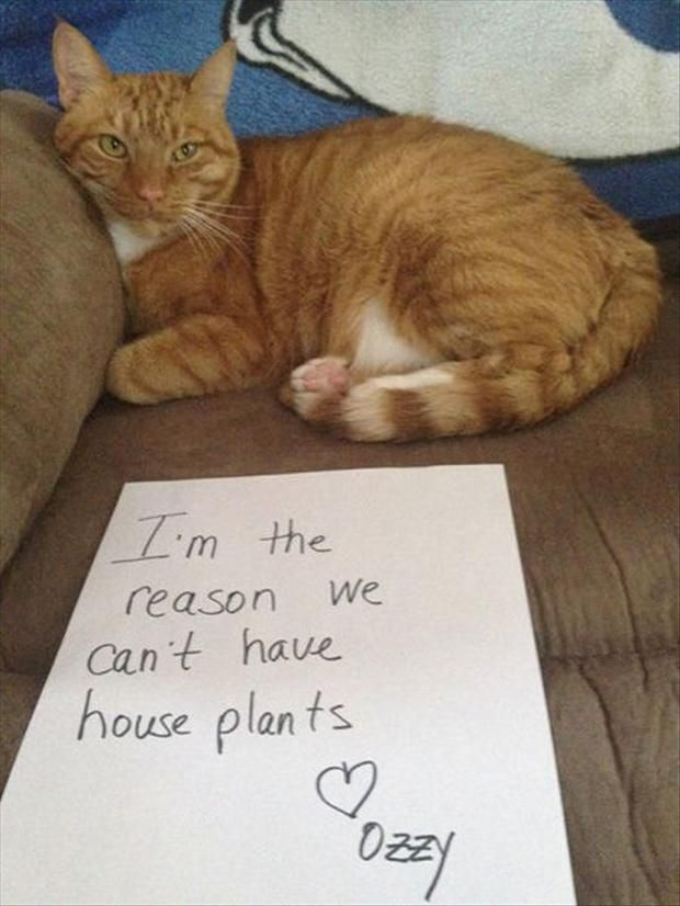 Best Cat Shaming Except Cats Never Feel Shame Images On - Hilarious cat owners struggles