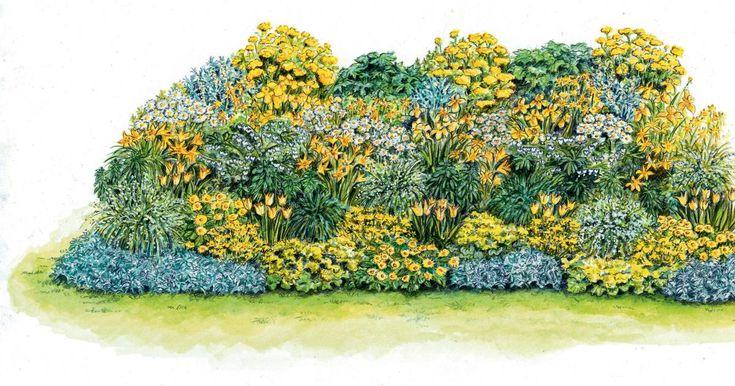 Gerade im Frühling und Frühsommer sind gelb blühende Pflanzen im Beet willkommen. Besonders frisch wirken sie zusammen mit weißen Partnern.