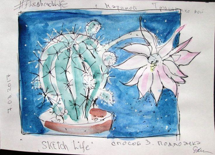 скетч цветок кактуса