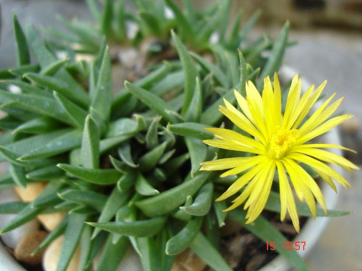 Pflanzen im Ba Vi Nationalpark - #AsiaticaReisen