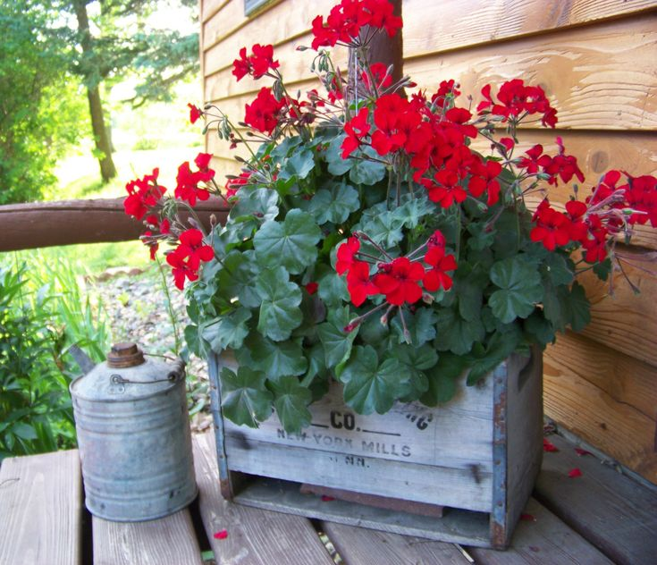 Antique New York Mills Bottling Co. Crate With Red Geranium And Antique Oil  Can. Potted FlowersFlowers GardenFlower ...