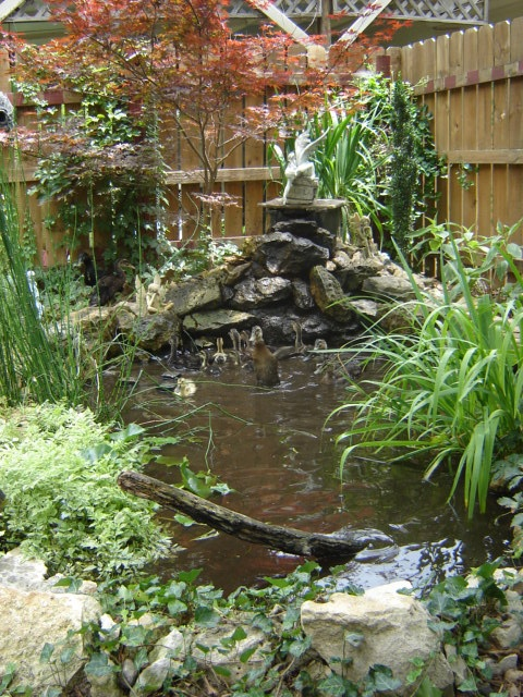Backyard Duck Pond Ideas :  Backyard Ducks on Pinterest  Raising Ducks, Duck House and Duck Pond