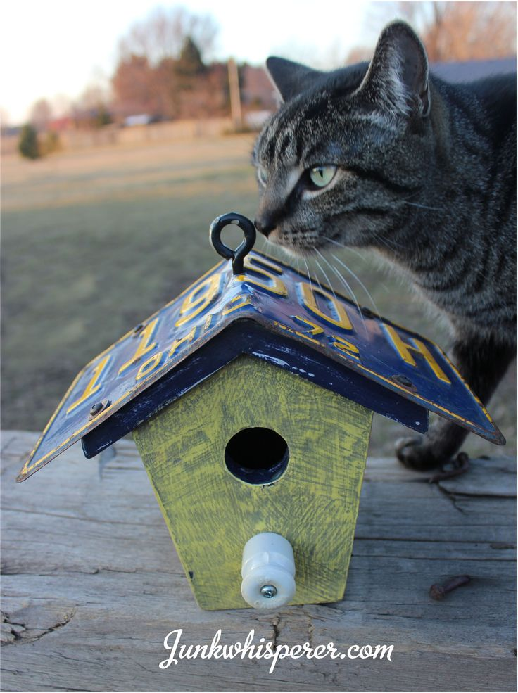 Kitty moves into the Birdhouse pic!