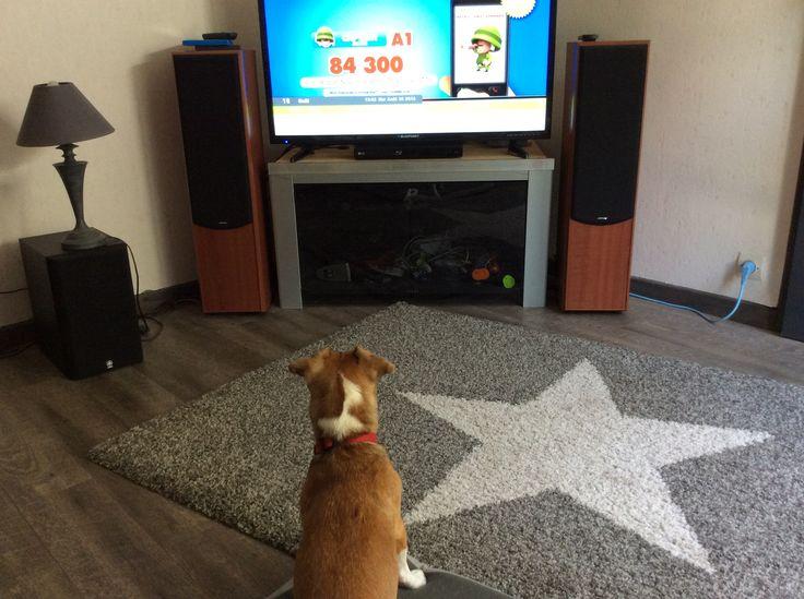 Un chien qui aime la télé