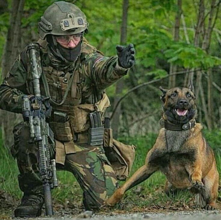 best 25  military working dogs ideas on pinterest