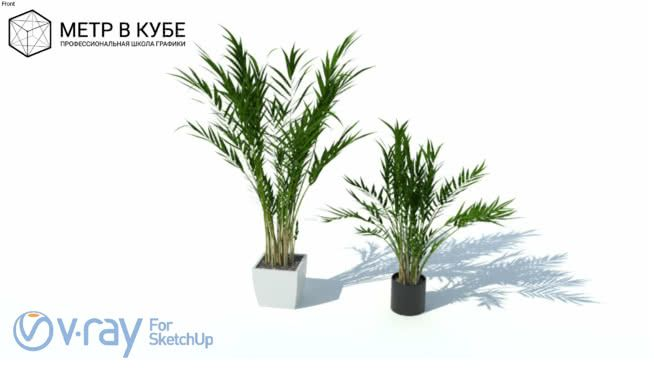 House plant, vray ready - 3D Warehouse   Sketchup - Soft Decor in