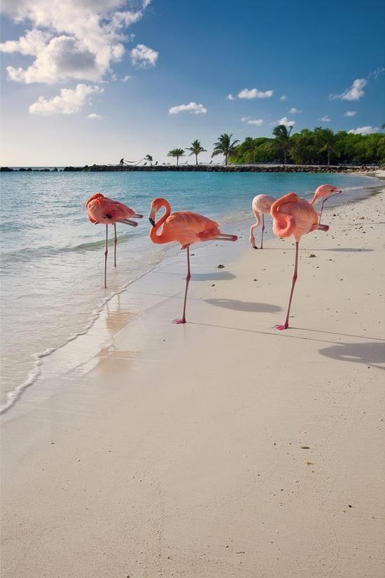 Pink flamingos on the beach