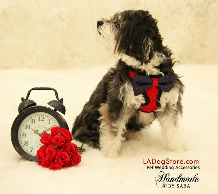 Red Dog Harness with Navy and Red bow plus a black leash