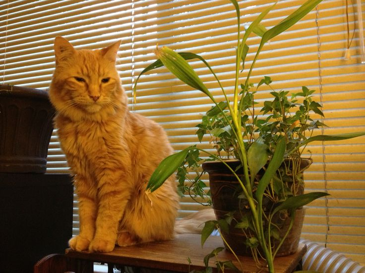 Gingi and his indoor garden