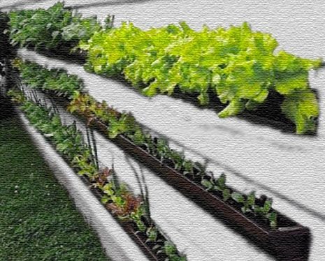 The real gutter gardening info sheet.  Finally, a site that remembers that plastic breaks down, that there are toxic coatings and things to be weary of.