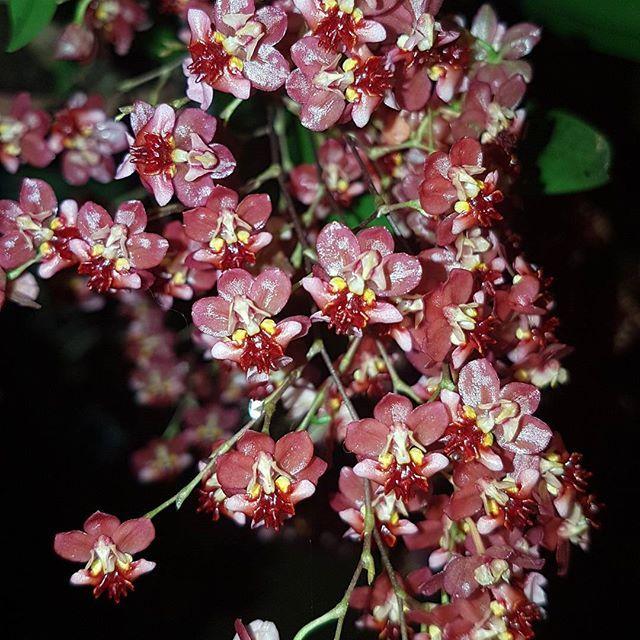 Já ouviu falar do uso de aspirina do cultivo de orquídeas? Achou estranho? Leia este artigo e tive suas dúvidas sobre o tema!