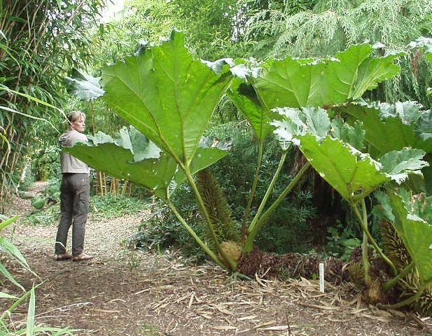 10 plantes qui vont rendre jaloux vos voisins !