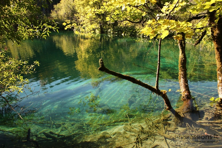 Unseen water clarity and waterfals in Plitvice, Croatia