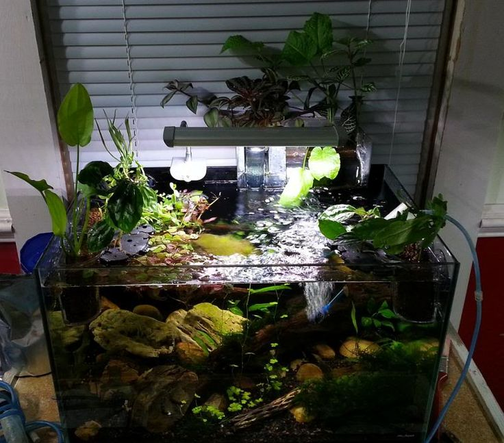 ... about Fish aquarium stuff on Pinterest Aga, Fish and Aquascaping