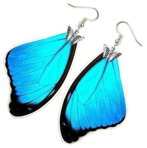 butterfly wing earrings - made with real butterfly wings! (the butterflies died naturally, don't worry!)