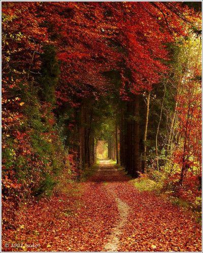 Autumn Tree Tunnel, Germany