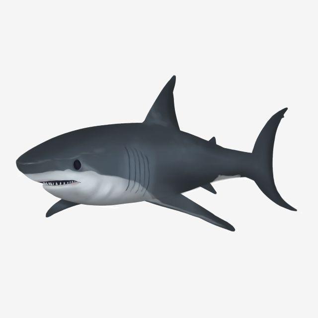 ภาพประกอบ แอน เมช น ปลาฉลาม ภาพประกอบของปลาฉลามภาพ Png และ Psd สำหร บดาวน โหลดฟร ภาพประกอบ ช าง พ นหล ง