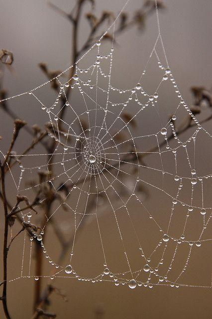 Spider web worth running into....gotta love morning dew or rain! Looks Like Crystal Jewelry!