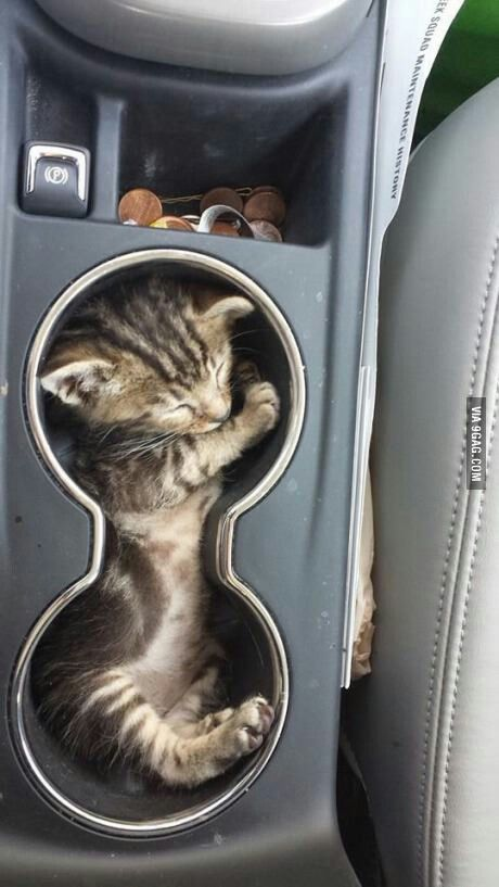 So cute. Kittens take a nap in the darnedest places.