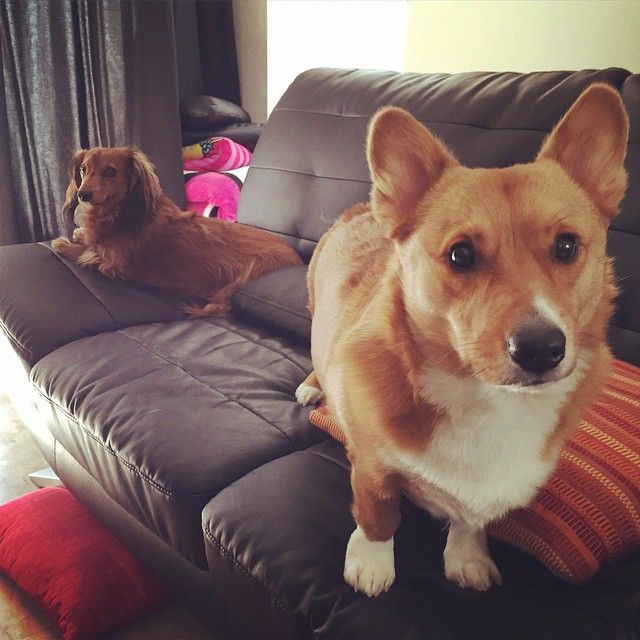 nigahiga's dogs Marlie and Teddy Dogs Pinterest Dogs