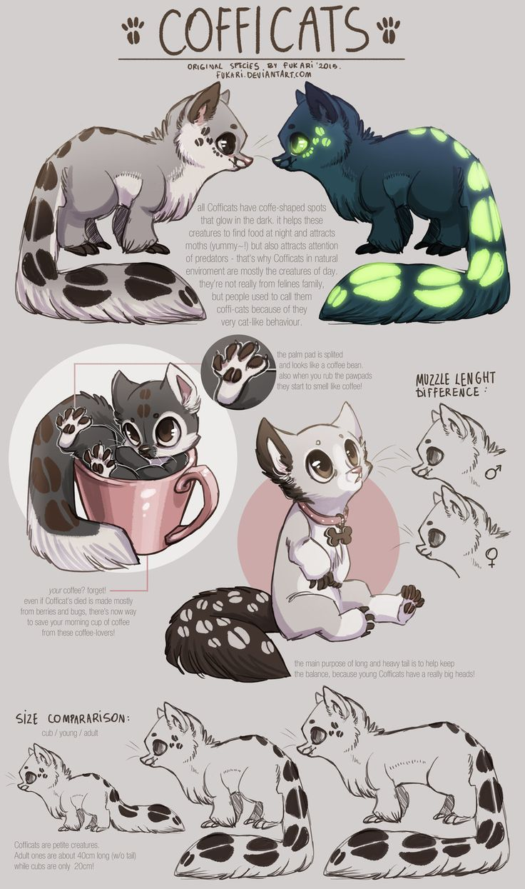 Cofficats - species sheet by Fuki-adopts.deviantart.com on @DeviantArt
