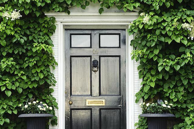 17 best images about climbing hydrangea on pinterest