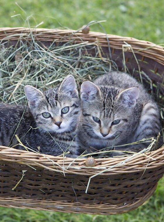 Katzen im Streichelzoo // Petting zoo with cats